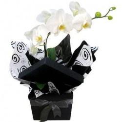 Dicas para tratar bem das suas orquídeas de interior