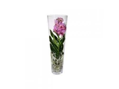 Jarra em Vidro com Orquídea Vanda