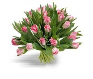 Bouquet de Tulipa Rosa