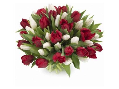 Bouquet de Tulipa Vermelha e Branca
