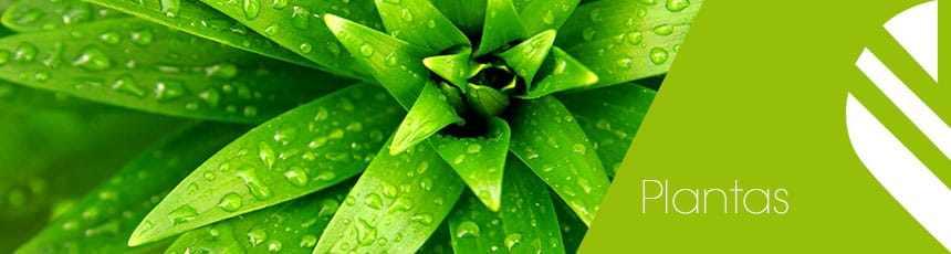 Comprar Plantas Online com Entrega ao Domicílio em 24H
