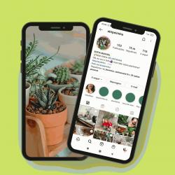 Plantas e selvas urbanas: 3 influencers portugueses a seguir no Instagram