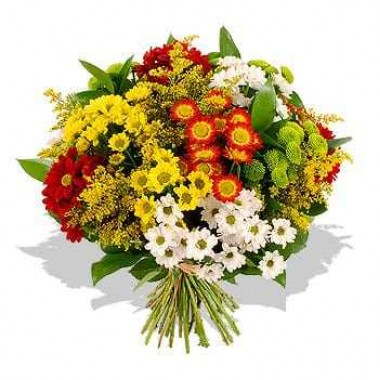 Bouquet de Margaridas Multicor