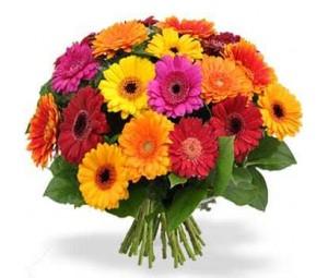 Bouquet de Gerberas Multicor