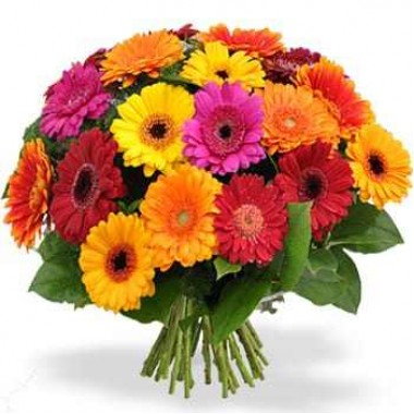 Bouquet de Gerberas Multicor