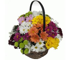 Cesto de Flores com Margaridas Multicor